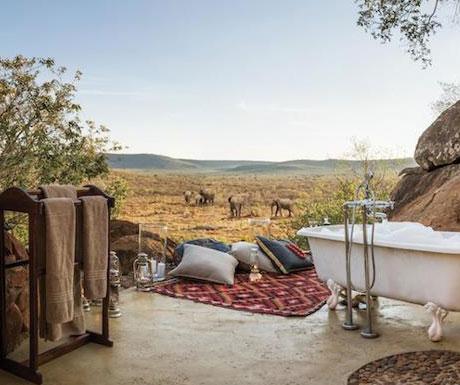 Madikwe Hills elephants