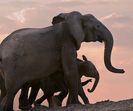 Tena Tena Camp elephants