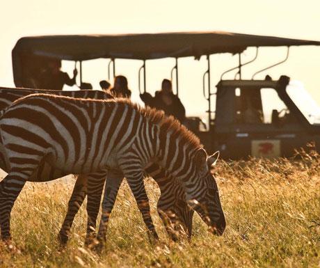 Luxury safari in Kenya
