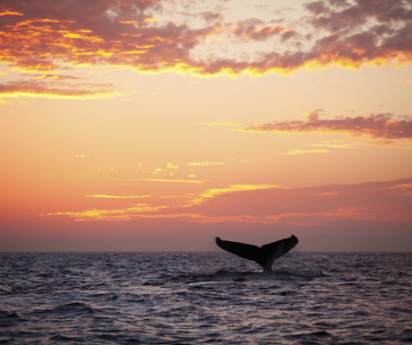 Sunset whale cruise