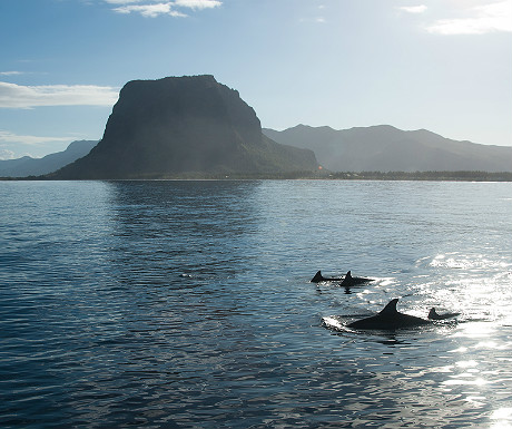 Dolphins in Mauritius