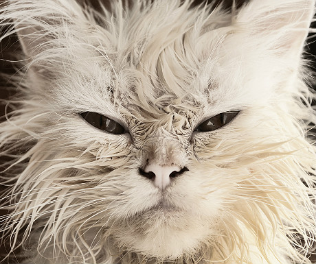 Cat that means business