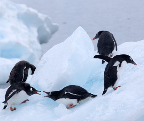 Quark penguins - Credit - Samantha Crimmin