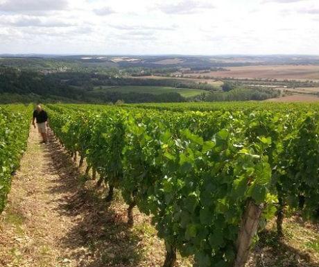 burgundy vineyards tour