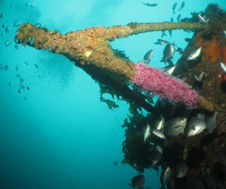 Wreck Diving New Zealand-Paihia Dive