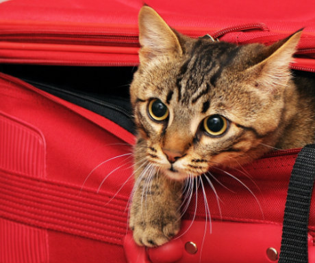 Cat inspecting luggage