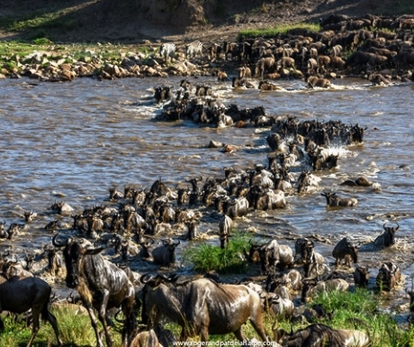 Wild Frontiers wildebeest stream crossing