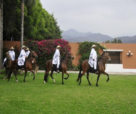 Peru Paso Horse