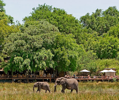 Chiefs Camp elephants