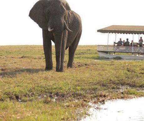 Savute Under Canvas elephants