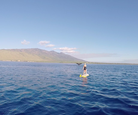 Whale examination in South Maui