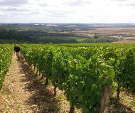 burgundy vineyards tour
