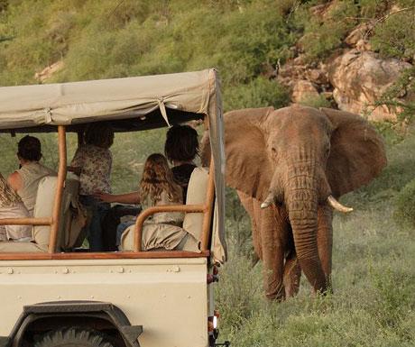 Saruni Samburu elephants