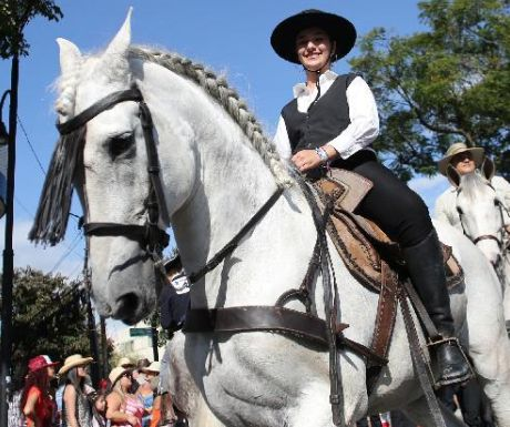 The equine parade