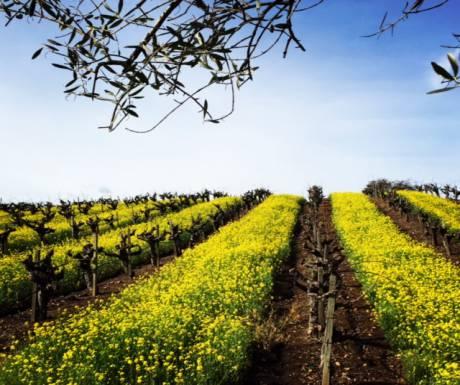 Vineyards Napa Valley Tours resized