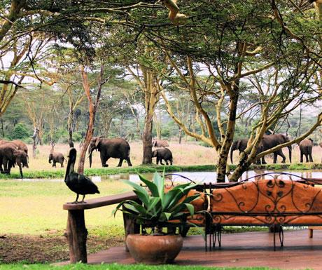 Sirikoi elephants