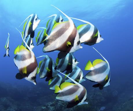 The Aquarium, Mozambique