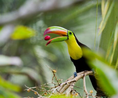 Belize rainforest