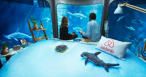 airbnb shark apartment 3