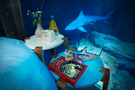 airbnb shark apartment 6