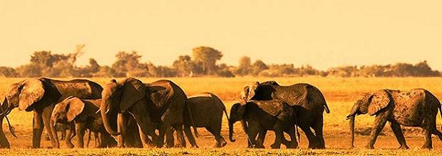 globus journeys africa