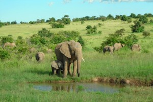 Elephant-Back Safaris In South Africa