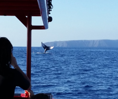 Whale from raft