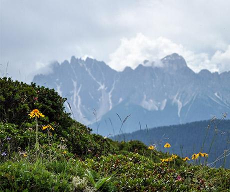 South Tyrol wellness