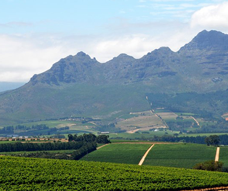 Winelands-South-Africa
